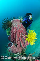 Diver Sponge and Crinoid Photo - Gary Bell