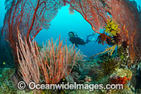 Diver and coral reef Photo - Gary Bell