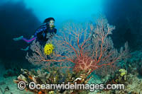 Scuba Diver and Reef Photo - Gary Bell