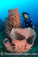 Diver Barrel Sponge and Crinoids Photo - Gary Bell