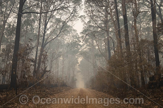 World Heritage-listed Cunnawarra National Park, swept with wild bushfire. December, 2029. Photo - Gary Bell