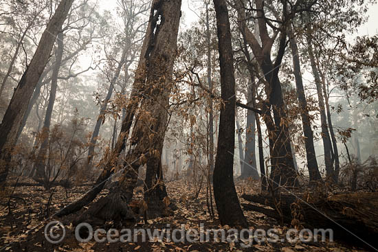 World Heritage-listed Cunnawarra National Park, swept with wild bushfire. December, 2049. Photo - Gary Bell