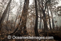 Bushfires Australia Photo - Gary Bell