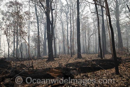 World Heritage-listed Cunnawarra National Park, swept with wild bushfire. December, 2079. Photo - Gary Bell