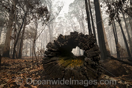 World Heritage-listed Cunnawarra National Park, swept with wild bushfire. December, 2139. Photo - Gary Bell