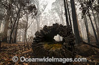 NSW Bushfires Australia Photo - Gary Bell