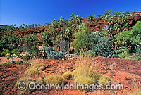 Palm Valley Outback Photo - Gary Bell