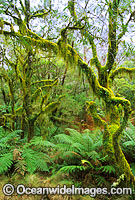 Hanging moss-covered trees image