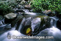 Rainforest Stream Dorrigo National Park Photo - Gary Bell