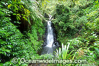 Waterfall Lamington National Park Photo - Gary Bell