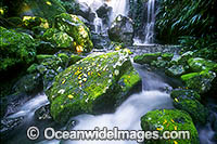Chalan Falls Lamington National Park image