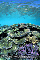 Great Barrier Reef photo