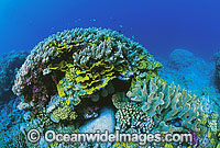 Great Barrier Reef Corals photo