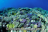 Coral Reef Photo - Gary Bell