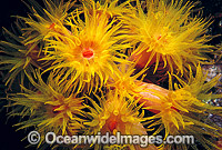 Sunshine Coral Great Barrier Reef stock photo