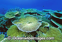 Coral Great Barrier Reef photo