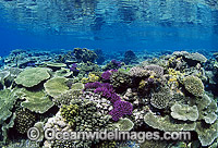 Corals Great Barrier Reef Photo - Gary Bell