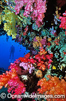 Scuba Diver with Soft Coral Tree Photo - Gary Bell