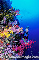 Scuba Diver Soft Coral reef Photo - Gary Bell