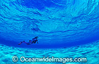 Scuba Diver diving in shallow water Photo - Gary Bell