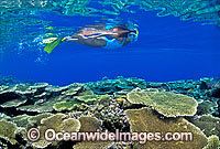Snorkel Diver Coral reef Photo - Gary Bell