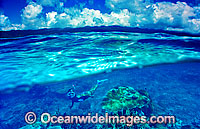 Snorkelers Coral reef Photo - Gary Bell