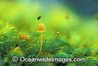 Fungi on tree moss Photo - Gary Bell