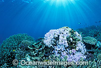 Coral Bleaching Great Barrier Reef photo