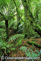 Mount Dandenong National Park image