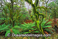 Hanging moss-covered trees rainforest image