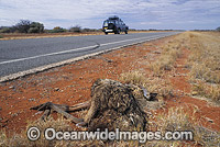 Emu road kill victim Photo - Gary Bell