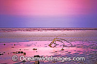 Heron Island seascape Photo - Gary Bell