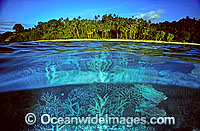 Palm fringed tropical island beach Photo - Gary Bell