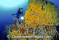 Scuba Diver and coral reef photo