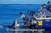 Shark wrangler fends off Great White Shark Photo - Gary Bell