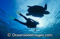 Loggerhead Sea Turtle Scuba Diver photo