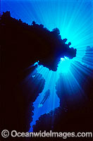 Silhouette of Scuba Diver in undersea cave Photo - Gary Bell