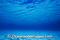 Underwater seascape Coral Sea photo