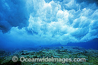 Breaking wave Coral reef Photo - Gary Bell