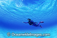 Scuba Diver clear blue water Photo - Gary Bell