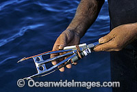 Harpoon device Shark identification tag transmitting device Photo - Gary Bell