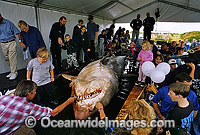 Spectators with a large female Great White Shark