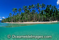 Coconut palm tropical island Photo - Gary Bell