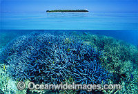 Tropical island Coral reef Photo - Gary Bell