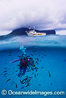 Scuba Diver Lord Howe Island Photo - Gary Bell