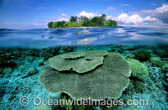 Half under and half over water picture of tropical island and Acropora Coral reef. Togian Islands, Sulawesi, Indonesia Photo - Gary Bell
