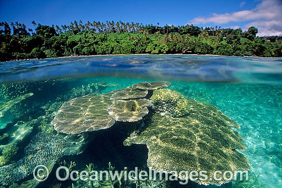 Half under and half over water picture of palm fringed tropical island beach and Acropora Coral reef. Fijian Islands