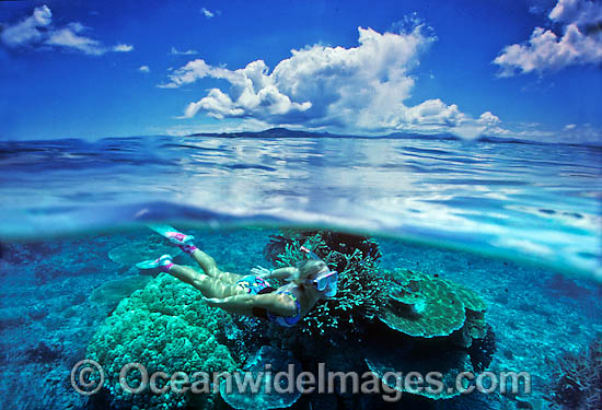 Half under and half over water picture of female Snorkel Diver / Snorkeler exploring Coral reef. Fijian Islands Photo - Gary Bell