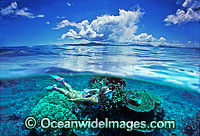 Coral Reef and Snorkeler Photo - Gary Bell