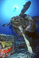 World War II Japanese bi-plane wreck Photo - Gary Bell